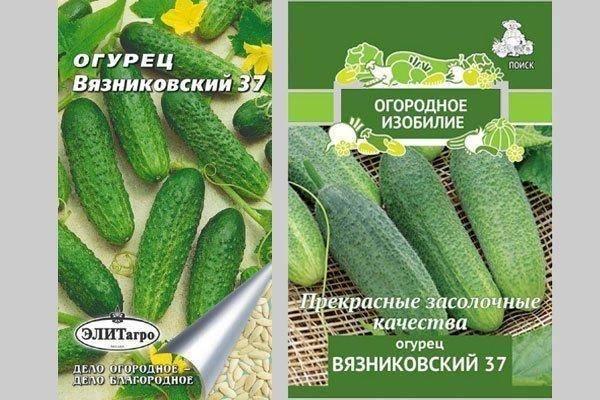 Луховицкие огурцы: особенности, лучшие сорта, преимущества гибрида луховицкий f1, технология выращивания, отзывы