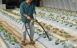 Схема подкормок огурцов для обильного плодоношения