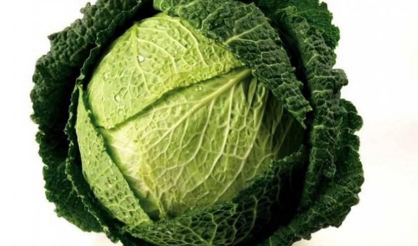 Белокочанная капуста: польза и вред, состав, калорийность