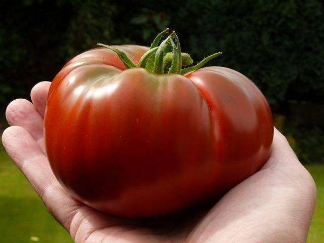 Шапка мономаха – царский помидор со своей грядки