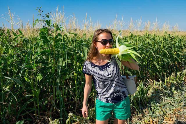 Кукуруза «бондюэль» консервированная: фото, калорийность, отзывы