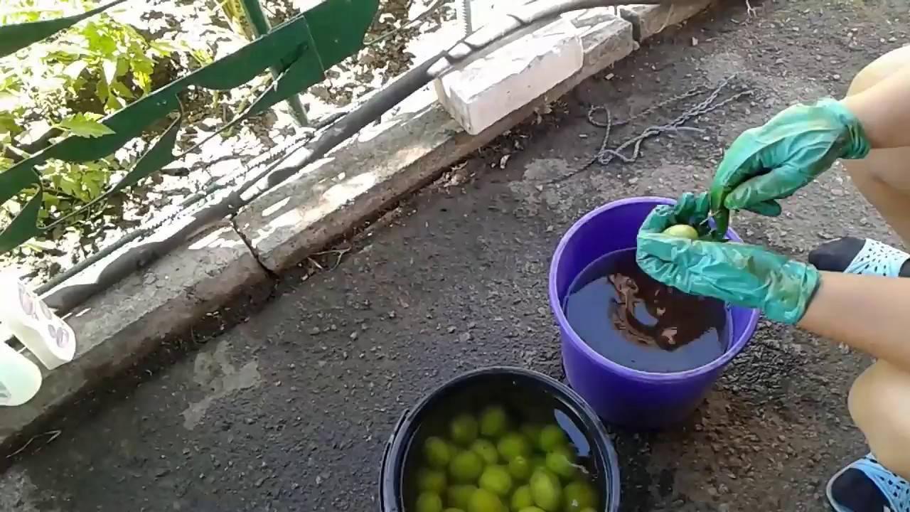 Рецепты народной медицины с настойкой маньчжурского ореха, рецепты приготовления и лечения в домашних условиях