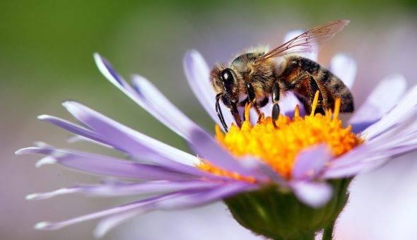 Профилактика и лечение нозематоза у пчел