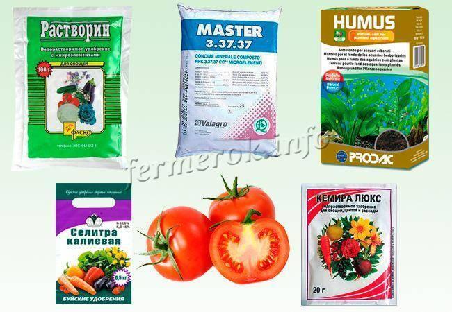 Подкормка рассады помидор в домашних условиях