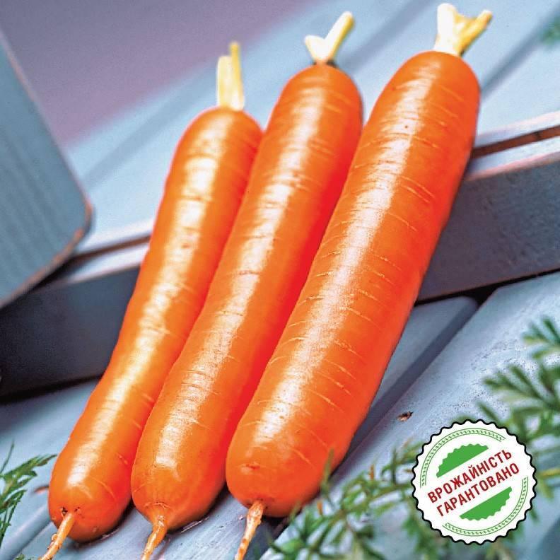 Морковь дордонь f1 отзывы