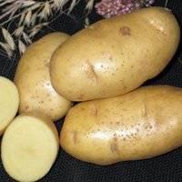 Картофель тулеевский - описание сорта, отзывы, фото, особенности выращивания и уход