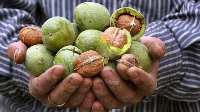 Как и чем быстро отмыть руки от орехов, ореховой скорлупы и листьев, как удалить пятна + фото и видео