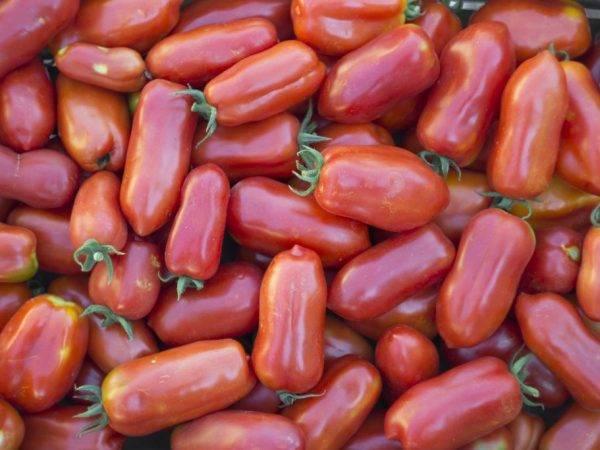 Сорт томата корнабель (f1)