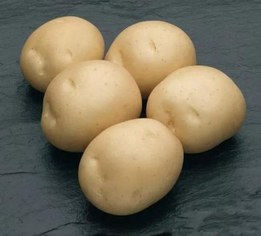 Картофель рамона — описание сорта, фото, отзывы, посадка и уход