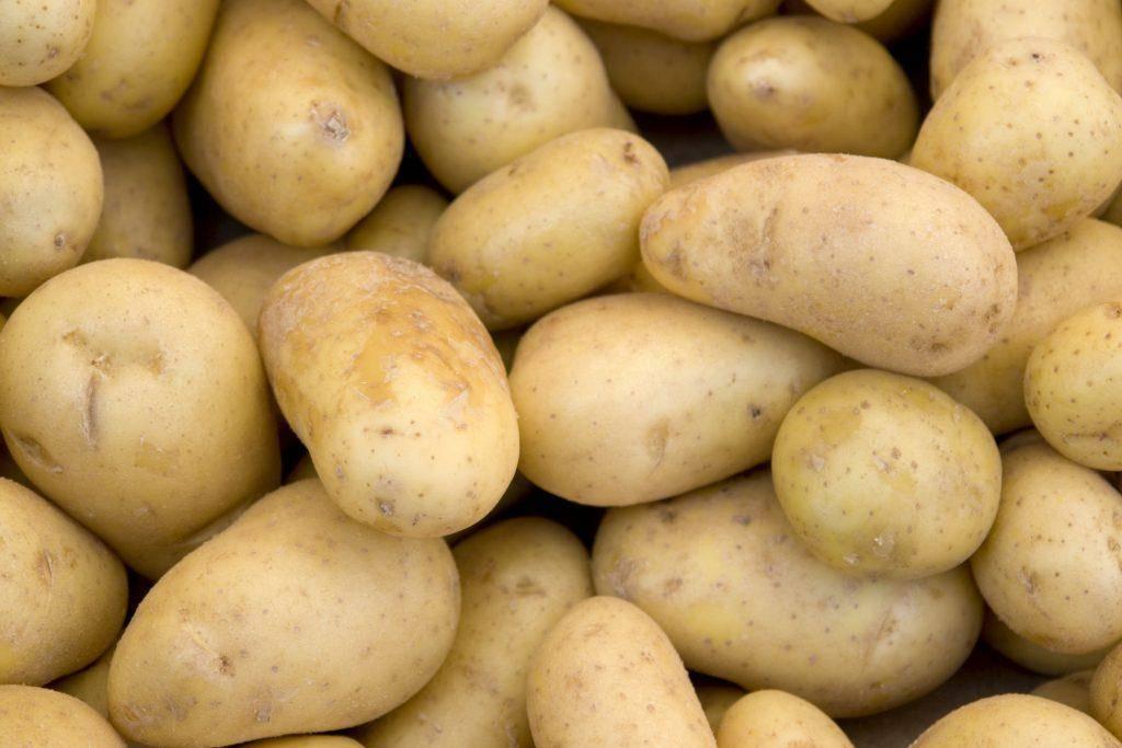 Сорт картофеля «альвара»: характеристика, описание, урожайность, отзывы и фото