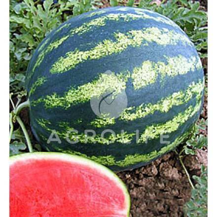 Арбуз кримсон руби f1 — описание сорта, выращивание и отзывы