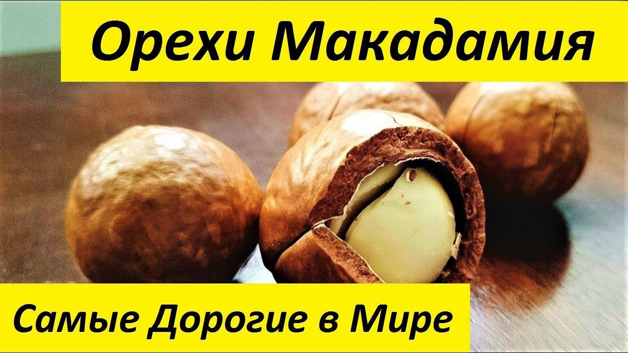 Орехи макадамия: польза и вред для организма человека