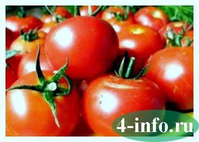 Универсальный скороспелый томат «волгоградский»: чем хорош и почему стоит его выращивать на своем участке