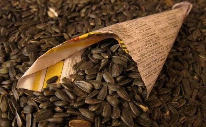 Полезно ли есть семечки подсолнуха жареные. семена подсолнечника полезные свойства.