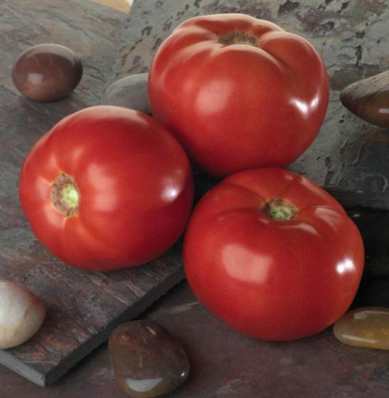 Гибрид с отличной урожайностью — томат «белла роса»: характеристика и описание сорта