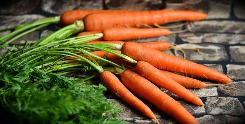 Лучшие и самые урожайные сорта моркови для сибири