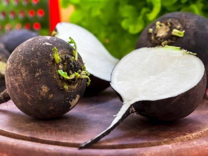 Чудодейственные свойства сока черной редьки — как применять, чтобы не навредить?