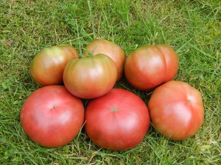 """Томат """"бизон черный"""" и другие разновидности сорта помидор """"розовый"""", """"желтый"""", """"оранжевый"""", описание и фото"""