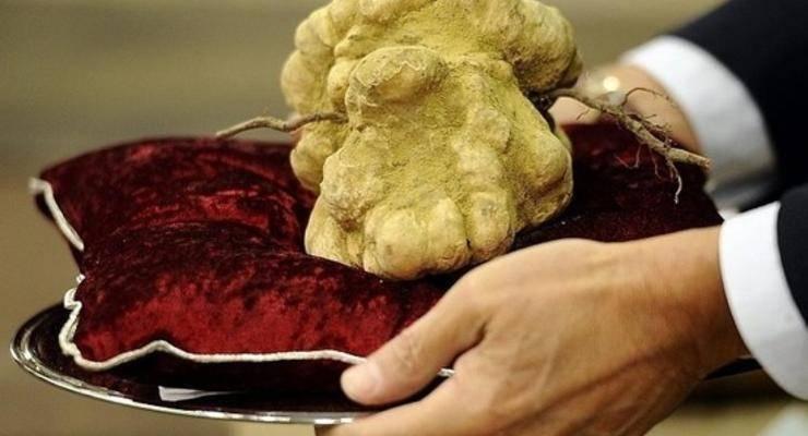 Какой самый дорогой орех в мире?