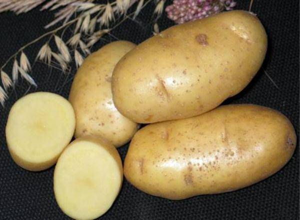 Какие бывают голландские сорта картофеля?