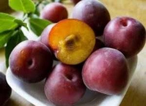 О сортах черного абрикоса: описание и характеристики, посадка, уход, выращивание
