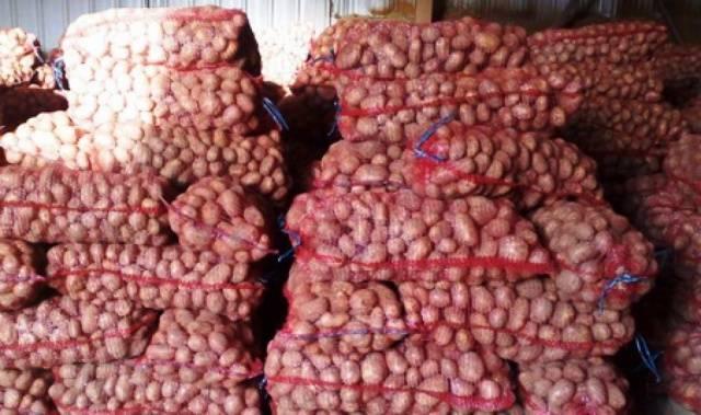 "Сорт картофеля ""ред леди"": описание сорта и характеристика с фото"