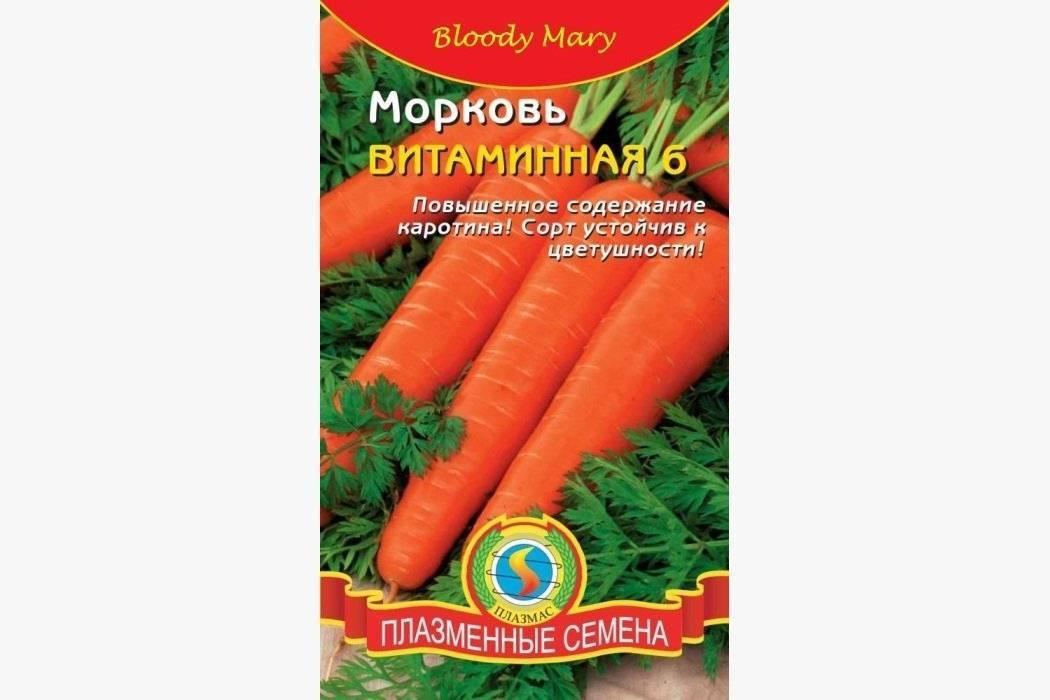 Когда сажать морковь под зиму