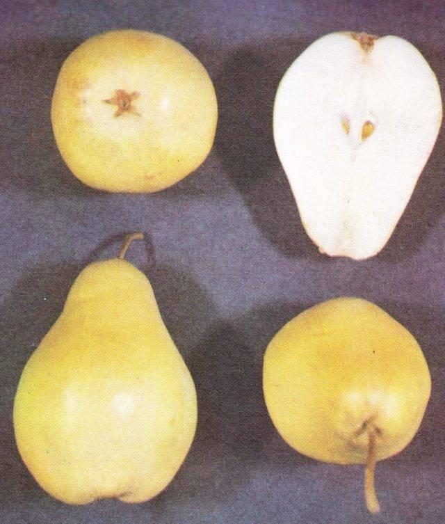 Вкусные осенние сорта груш с фотографиями и описанием