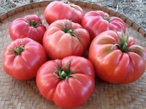 Сорт помидор дикая роза: урожайность и описание