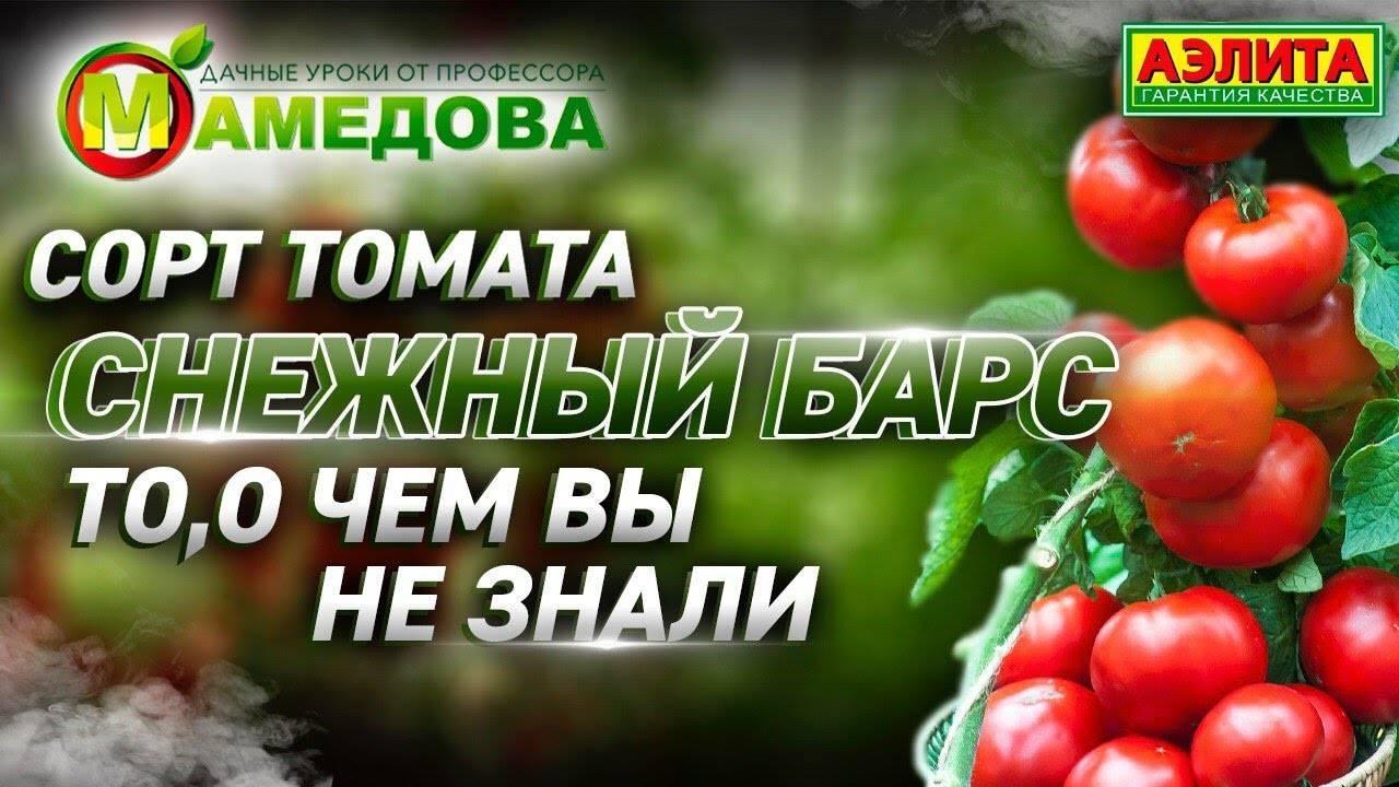 Холодостойкий томат снежный барс. детальное описание сорта и отзывы фермеров