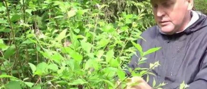 Особенности посадки миндаля — полив растения, требования к почве