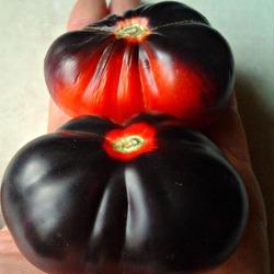 Сорт томата «розовая груша»: фото, отзывы, описание, характеристика, урожайность