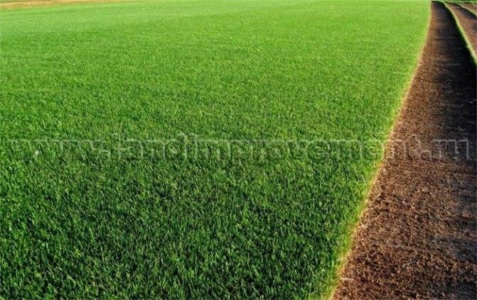 Газон рулонный: преимущества и укладка травы в рулонах