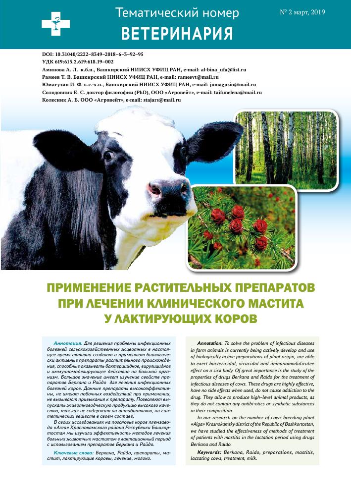 Симптомы скрытого мастита у коровы и способы его лечения