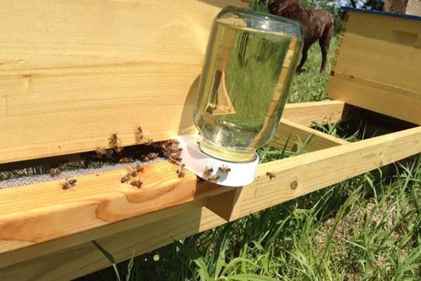 Сахарный сироп для пчел или медовая сыта