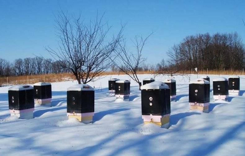 Способы зимовки пчёл в сибири