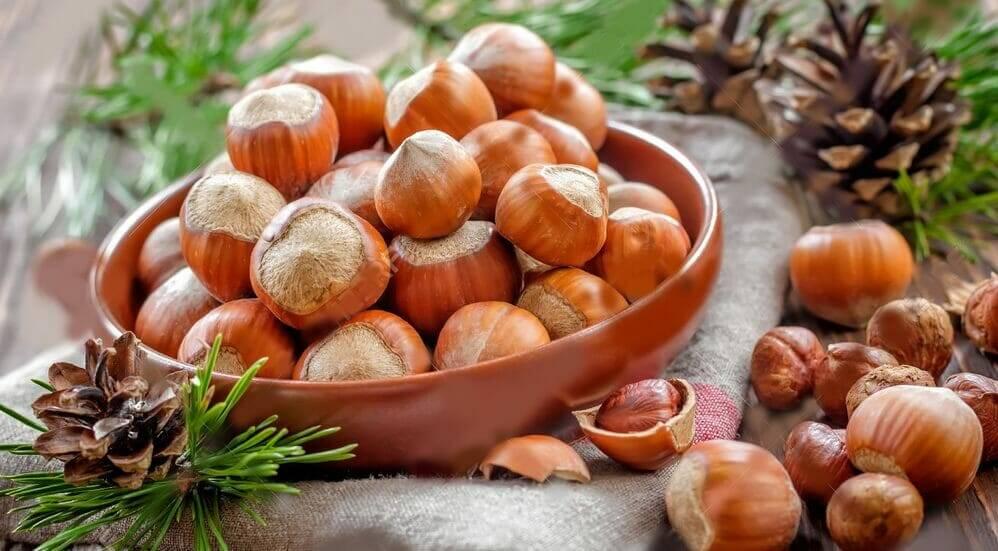 Особенности выращивания краснолистной лещины (фундука)
