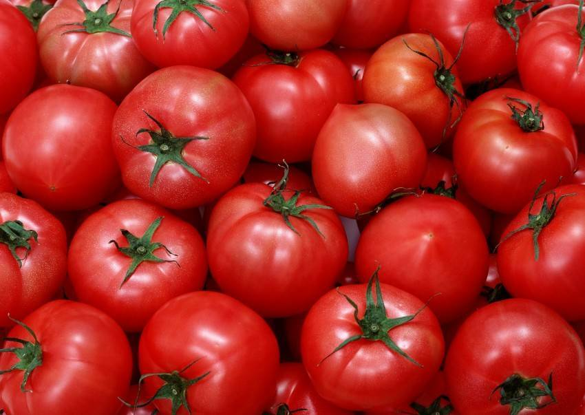 Гибрид томатов «благовест f1», характеристика и описание