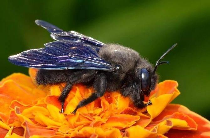 Как избавиться от пчел в стене деревянного дома: советы, видео