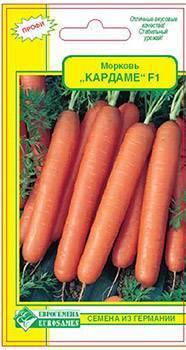 Описание и методы борьбы с морковной мухой