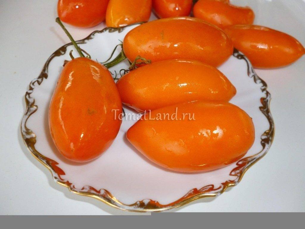 Томат золотое руно: характеристика и описание сорта, отзывы, фото, урожайность
