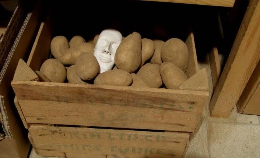 Как хранить картошку и другие овощи на балконе - технополис завтра