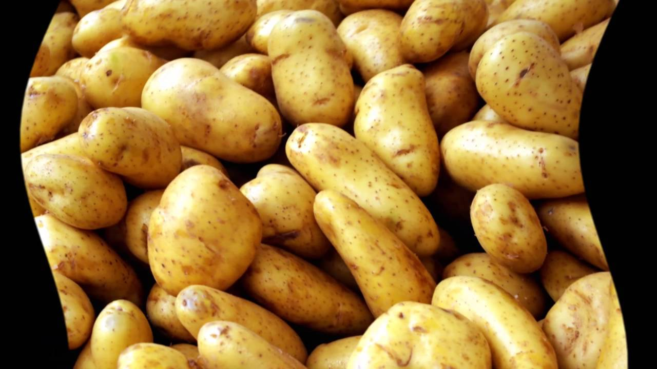 Как сохранить урожай картофеля