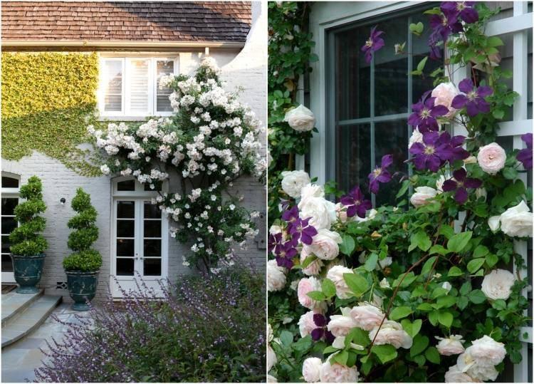 Розы плетистые в ландшафтном дизайне