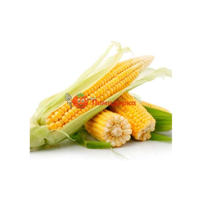 Кукуруза трофи f1: описание сорта, фото, отзывы