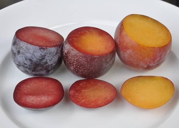 Гибрид сливы и абрикоса: описание и особенности выращивания. сорта, характеристики и названия фрукта (100 фото)