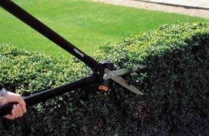 Обрезка сада – какие инструменты нужны?