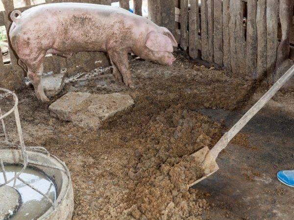 Навоз как удобрение: внесение жидкого коровьего и свиного, кроличьего, козьего и другого навоза в почву весной и осенью. какой лучше для огорода? отзывы