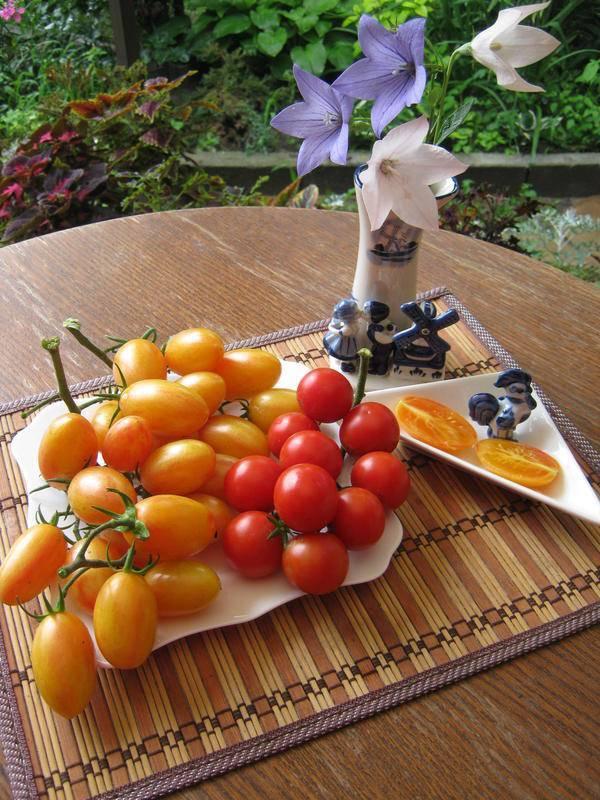 Мастодонт среди гибридных помидоров — томат партнер семко f1: описание сорта и характеристики