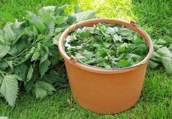 Удобрение из крапивы - как сделать, свойства, правила применения